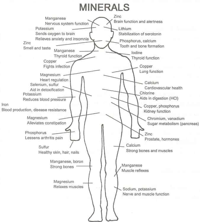 mineral function in the body